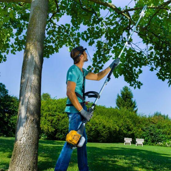 boom snoeien hoogsnoeier